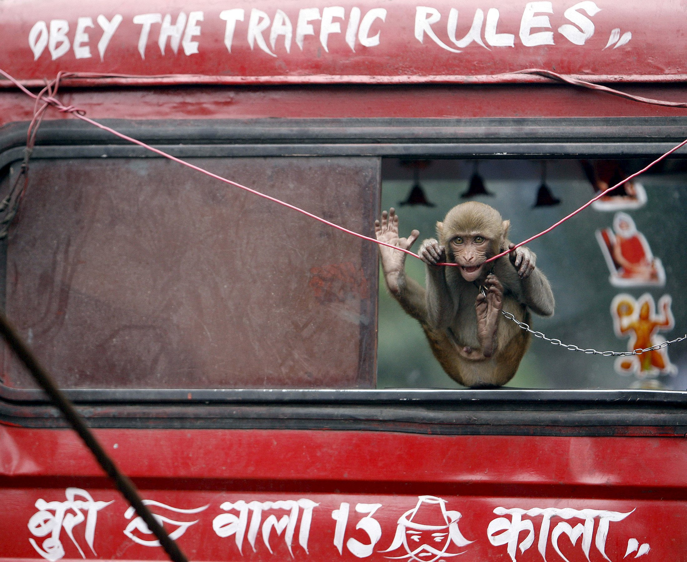 Индия, обезьянки