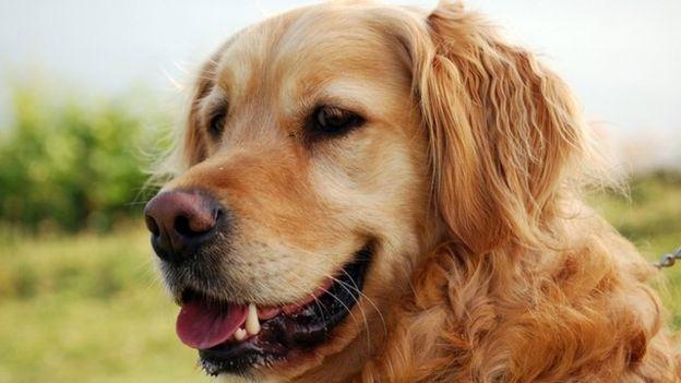 «Гознак» переходит от печатания денег к искусственному интеллекту и ищет пропавших собак