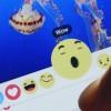 Like в Facebook могут сменить на расширенный набор эмоциональных реакций
