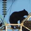 Медведь, провода